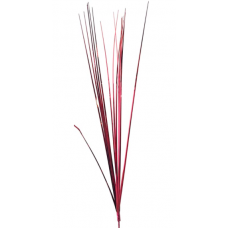 "18"" Onion Grass ""Burgundy"""