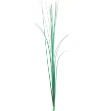 "18"" Onion Grass ""Holiday Green"""
